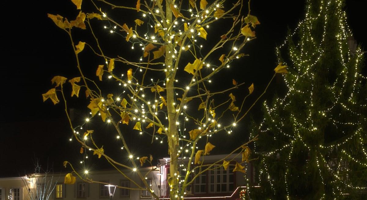 Lichterketten bringen die Weihnachtsbeleuchtung zu jeden Baum
