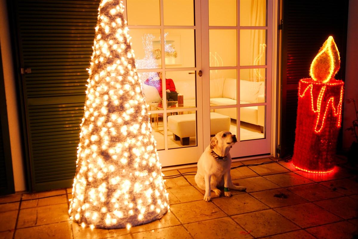 Hund-vor-Weihnachtsschmuck