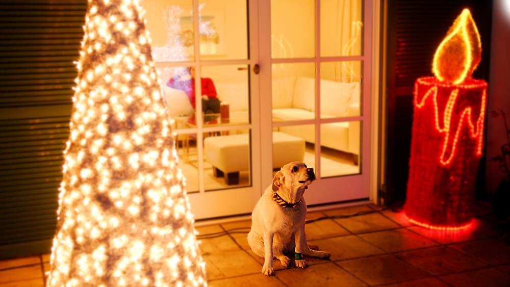 Weihnachtsschmuck und lächelnder Hund